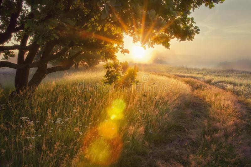 landscape-rays-sun-branches-tree-early-autumn-morning-sunrise-solar-glare-beautiful-scenery-meadow-96218261.jpg.f40ecfce0cf052bddf0624ed9b13a4a2.jpg